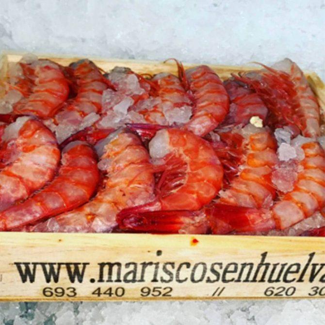 colas-de-gamba-roja-a-domicilio (1) (1)